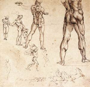 anatomical-studies