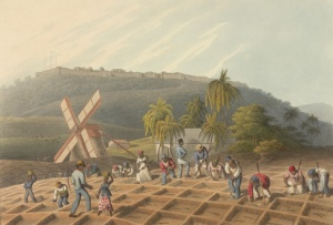 Planting cane in the West Indies
